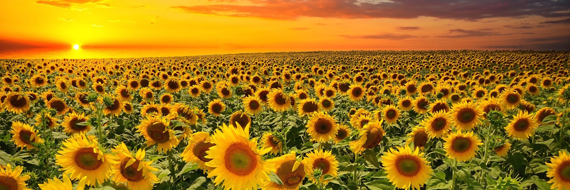 tsvety_tsvetenie_field_flowers-2